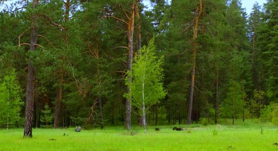 Зеленый Донецк